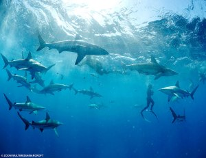 swim_with_sharks